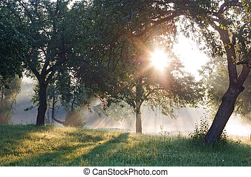 amanecer, manzana, eden, jardín