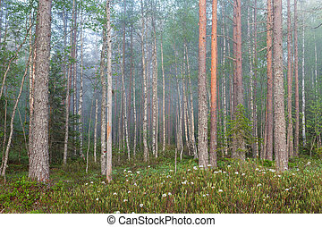 amanecer, niebla, bosque