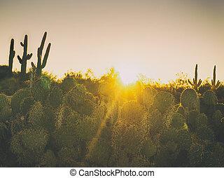 amanhecer, deserto, manhã