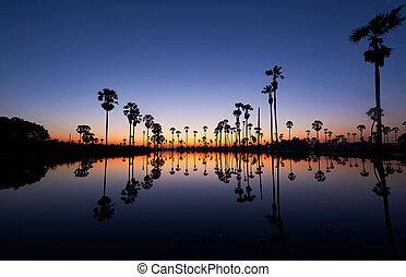 amanhecer, em, árvore palma coco, campo