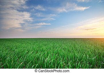 amanhecer, em, grean, meadow.