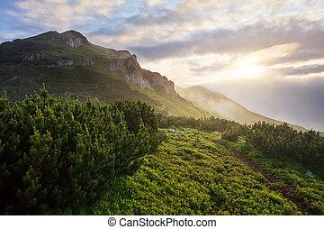 amanhecer, em, nebuloso, montanhas