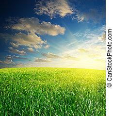 amanhecer, em, prado verde