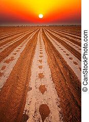 amanhecer, sobre, a, campo algodão