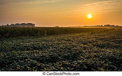 amanhecer, sobre, fazenda, campos, em, rural, york, município, pennsylvania.