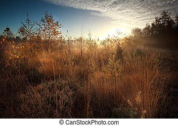 amanhecer, sobre, pântano, durante, nebuloso, outono, manhã