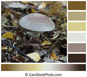 Amanita Fly-Agaric Mushroom, Leaves In Forest. Palette With Complimentary Colour Swatches.
