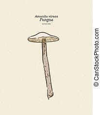 Amanita virosa, commonly known in Europe as the destroying ...