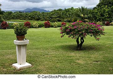 amant, plan, ogród