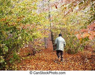 amante natureza, de, outono
