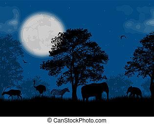 amanti, carrello, notte, blu