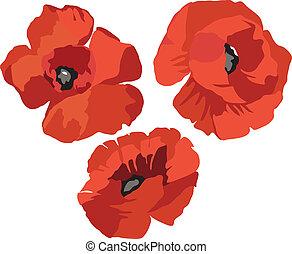 amapola, flor, conjunto