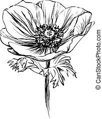 amapola, flor, tallo