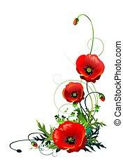 amapola, flores, aislado