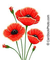 amapola, flores, rojo