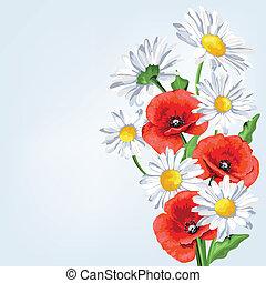 amapola, flowers., plano de fondo, elegancia, camomile
