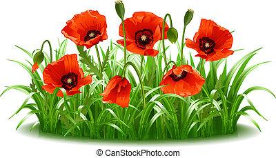 amapolas, vector, rojo, grass.