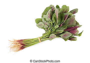 amaranth - a bunch three-colored amaranth with white...