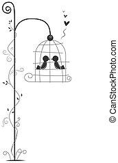 amare uccelli