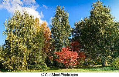 amarela, árvores outono, cena, vermelho, parque