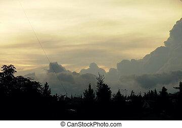 amarela, céu ocaso, com, árvore, silueta