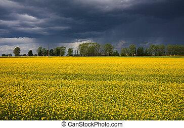 amarela, capim, ligado, campo, tempestade, chuva