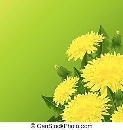 amarela, dandelion, flor