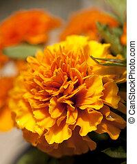 amarela, flor alaranjada, marigold