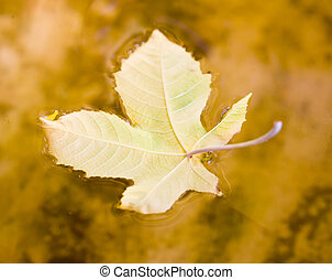 amarela, folha outono, ligado, a, água