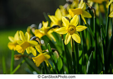 amarela, jardim, cama
