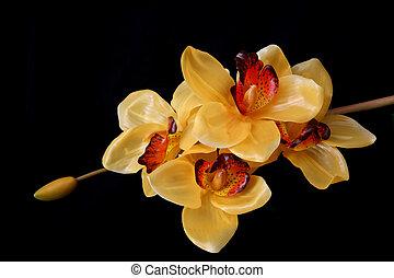amarela, orquídeas