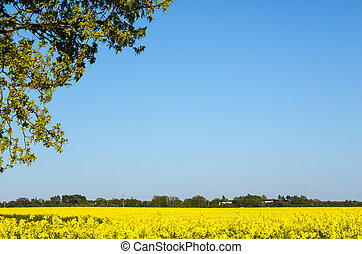 amarela, paisagem