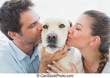 amarela, par, sofá, seu, beijando, labrador, feliz