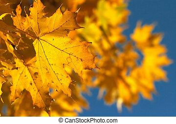 amarela, ramo, 2