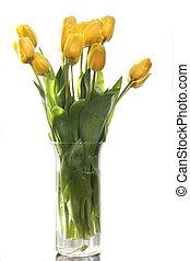 amarela, tulips