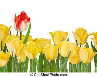 amarela, tulips, e, um, red., eps, 8