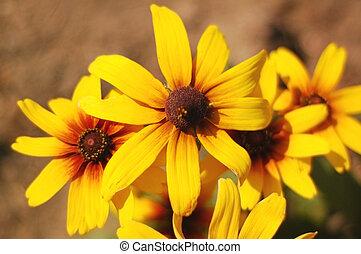 amarelo floresce, sob, sol brilhante