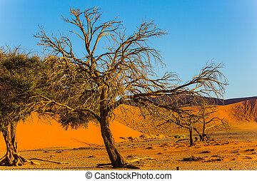 amarillo, dunas, de, el, desierto de namib