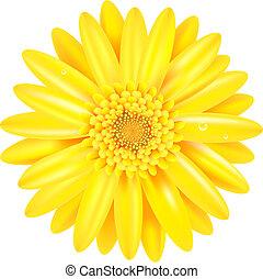 amarillo, gerber