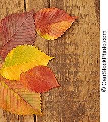 amarillo, otoño sale, en, viejo, madera, plano de fondo