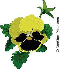 amarillo, pensamiento, flor, con, hojas, y, brote