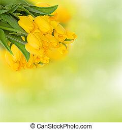 amarillo, ramo, tulipanes