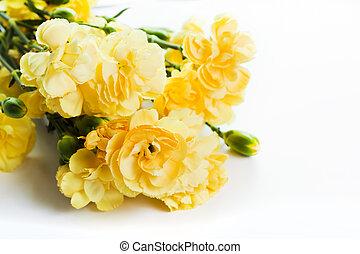 amarillo, suave, flores del resorte, ramo, blanco, plano de fondo