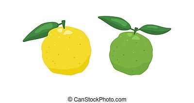amarillo, vector, aislado, fondo., cidra, blanco, fruta, yuzu, japonés, verde, ilustración