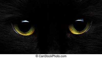 amarillo verde, ojos, de, un, gato negro, primer plano