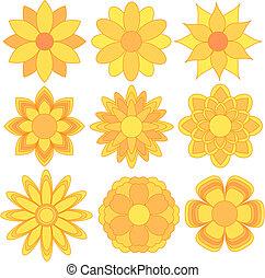 amarillo, y, flor anaranjada, colección