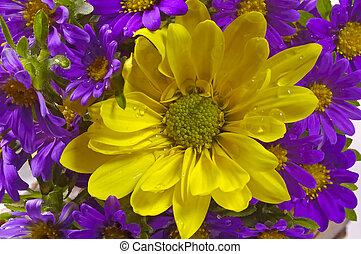 amarillo, y, flores púrpuras