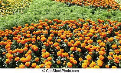 amarillo, y, naranja florece, campo, plano de fondo