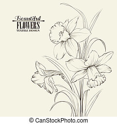 amarrada, narcissus, flores, isolado, branco, fundo