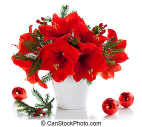 amaryllis, クリスマス, 整理